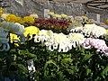 Yamagata City Chrysanthemum Show 山形市菊花展 - panoramio.jpg