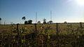 Área rural em Canápolis (MG).jpg