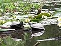 Болотные черапахи на озере Черепашье.JPG