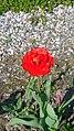 БотаническийСадCH9.jpg