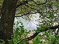 Вид на Самару в гирлі балки Бандурки.jpg