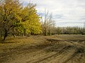 Зауральная роща в сентябре - panoramio (2).jpg