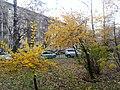 Осень - panoramio (46).jpg