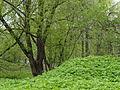 Парк усадьбы Грачёвка в мае.JPG