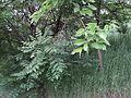 Парк шума Гази Баба во мај (179).JPG