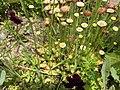 Растения. Сахалин.jpg