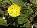 Растения в Седово 125.JPG