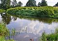 Река Уса - Ussa river - panoramio.jpg