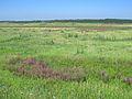 """Трав'янисті простори давньої терасової рівнини. Ландшафтний заказник """"Отченашкові наділи"""".jpg"""