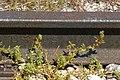 רכבת העמק - מעבירי מים והסוללה - צומת העמקים - עמק יזרעאל והגלבוע (79).JPG