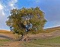 اطراف روستای آغ زیارت - panoramio.jpg