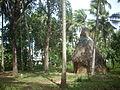 വൈക്കോല് തുറു DSCN0791.jpg
