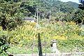 大江横浜区 - panoramio.jpg