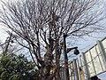 建仁寺 - panoramio (1).jpg