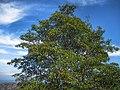 树 - panoramio (4).jpg