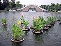 植物园人工湖 - panoramio.jpg