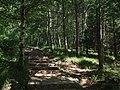 走在白桦林中 - Walking in Birch Trees - 2012.08 - panoramio.jpg