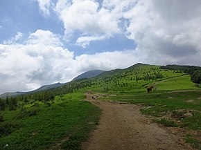 高山草甸 - Alpine Meadows - 2016.08 - panoramio.jpg