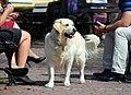 02014 Der weiße Hund von Sanok.JPG