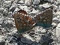 050 Papillons au printemps.JPG