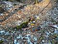 15-02-08-Aussichtsturm-Eberswalde-Brunnenberge-RalfR-P1040299-06.jpg