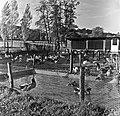 1960 Elevage de canards au CNRZ aviculture Cliché Jean Joseph Weber.jpg