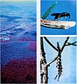 1980-1990 national program of research for forests and associated rangelands. - (1982) (20386239829).jpg