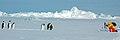 2007 Snow-Hill-Island Luyten-De-Hauwere-Emperor-Penguin-24.jpg