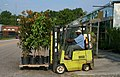 2008-07-26 Clark GCS-15 forklift transporting potted trees.jpg