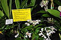 2010 Pacific Orchid Expo 09.jpg