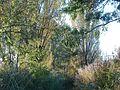 20111031Kotlachgraben Hockenheim8.jpg