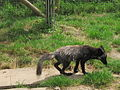 20120802 Zoo Zonnegloed (44).JPG