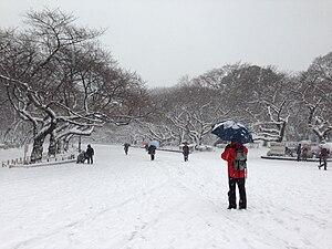 大雪に見舞われた上野恩賜公園