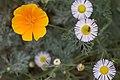 2015-365-209 Pick Your Flower Levels (20110799001).jpg