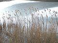 20150219 62 Wienerwaldsee (Large) (16395919929).jpg