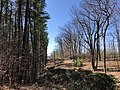 2018-03-18 11 59 36 View along a gap in the forest created for the passage of utility wires within Occoquan Regional Park in Laurel Hill, Fairfax County, Virginia.jpg