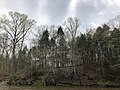 2019-04-13 14 26 09 View west across Bull Run from the Bull Run-Occoquan Trail towards a grove of Eastern Hemlock trees within Hemlock Overlook Regional Park, in southwestern Fairfax County, Virginia.jpg