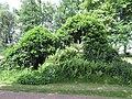 2020-06-02 — Lourdesgrot Heeckeren (Goor) - 1.jpg