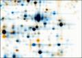 2D gel images dual channel warped.PNG
