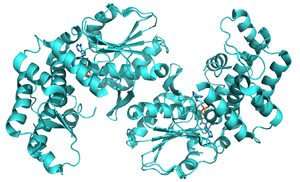 3-dehydroquinate synthase - Image: 3 dehydroquinate synthase 3CLH