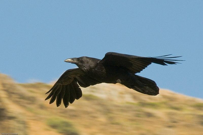 Raven Flight Nude Photos 91