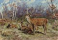 A Buck and Doe in the Forest 2006 NYR 01717 0270 .jpg