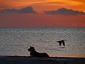A Dog and a Pelican (5307790590).jpg