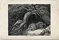 A lion and lioness defending their cubs at the mouth of thei Wellcome V0021509.jpg