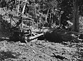 A man in a small bulldozer moving a large tree trunk surrounded by native bush (AM 77406-1).jpg