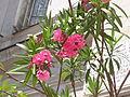 Ab plant 1373.jpg