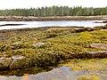 Acadia National Park (8111154296).jpg