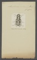 Acanthomera - Print - Iconographia Zoologica - Special Collections University of Amsterdam - UBAINV0274 039 01 0002.tif