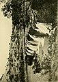 African invertebrates - a journal of biodiversity research (1909-1916) (17756854098).jpg