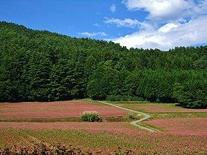 Minowa, Nagano - Red soba fields in Minowa